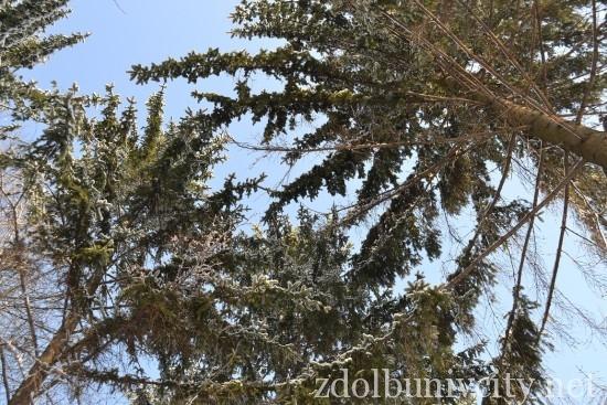 зима у Здолбунові (16)