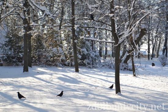 зима у Здолбунові (7)