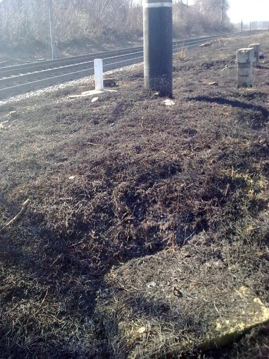випалена трава (2)