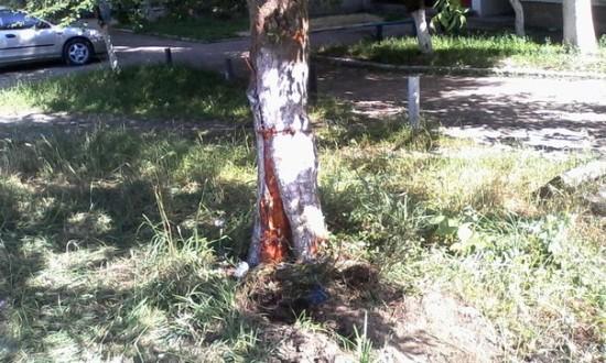 аварія з деревом (6)