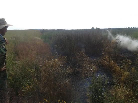 торфовище пожежа (4)